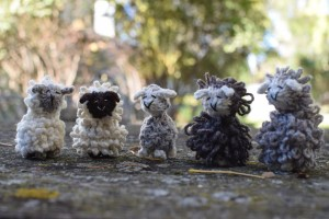 3 wee sheep